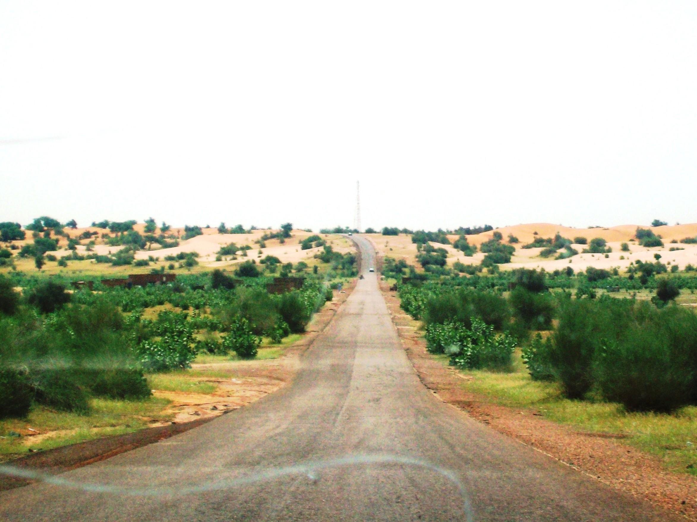 desert_does_turn_green